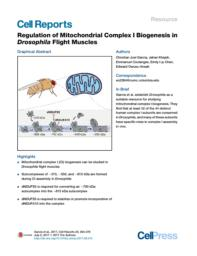 thumnail for Regulation of Mitochondrial Complex I Biogenesis in Drosophila Flight Muscles.pdf