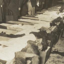 Bodies of Triangle Shirtwai...