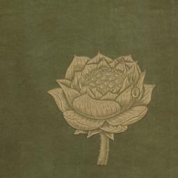Lotus and Jewel