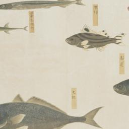 Group of Eight Fish from th...