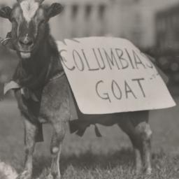 Columbia Goat