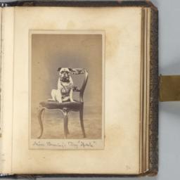 Miss Bromley's Dog 'Spark'