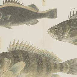 Group of Three Fish from th...