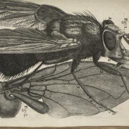 Micrographia: or, Some Phys...