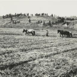 Two Teams of Horses Plowing...